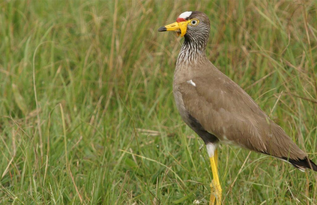 8 Days Murchison Falls Wildlife Safari in Uganda