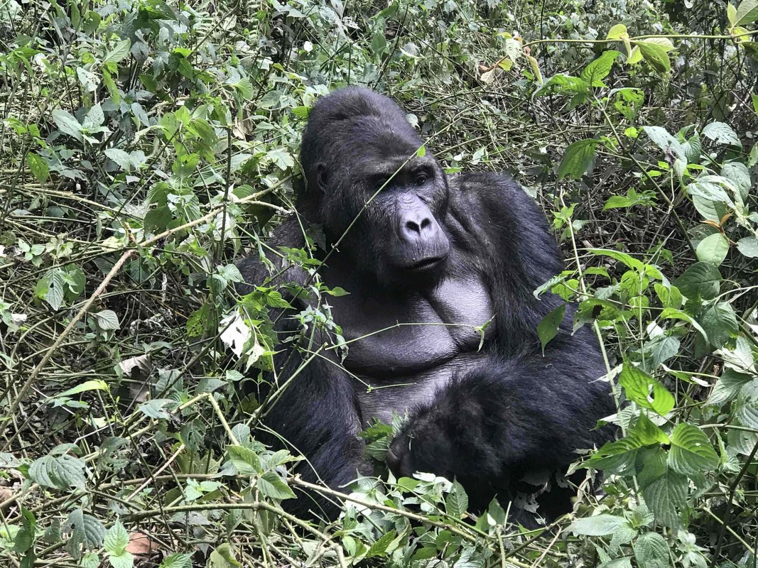 6 Days Congo Primate & Adventure Safari