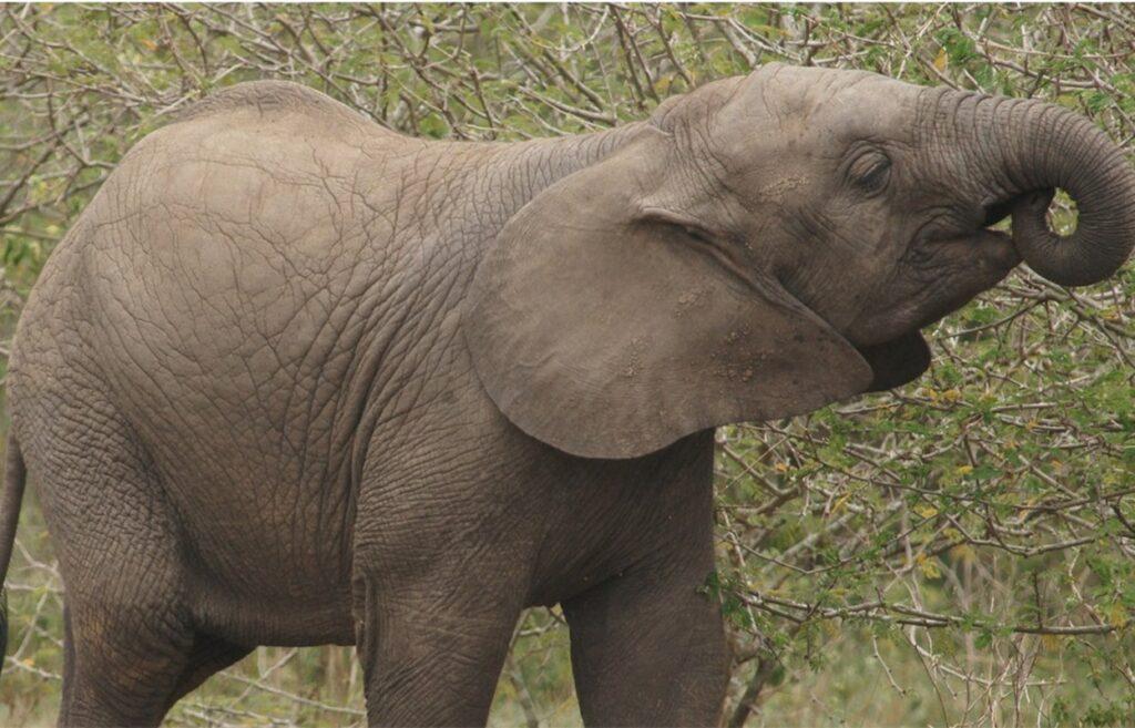 6 Days Uganda Gorilla safari, Wildlife, Chimpanzee trekking