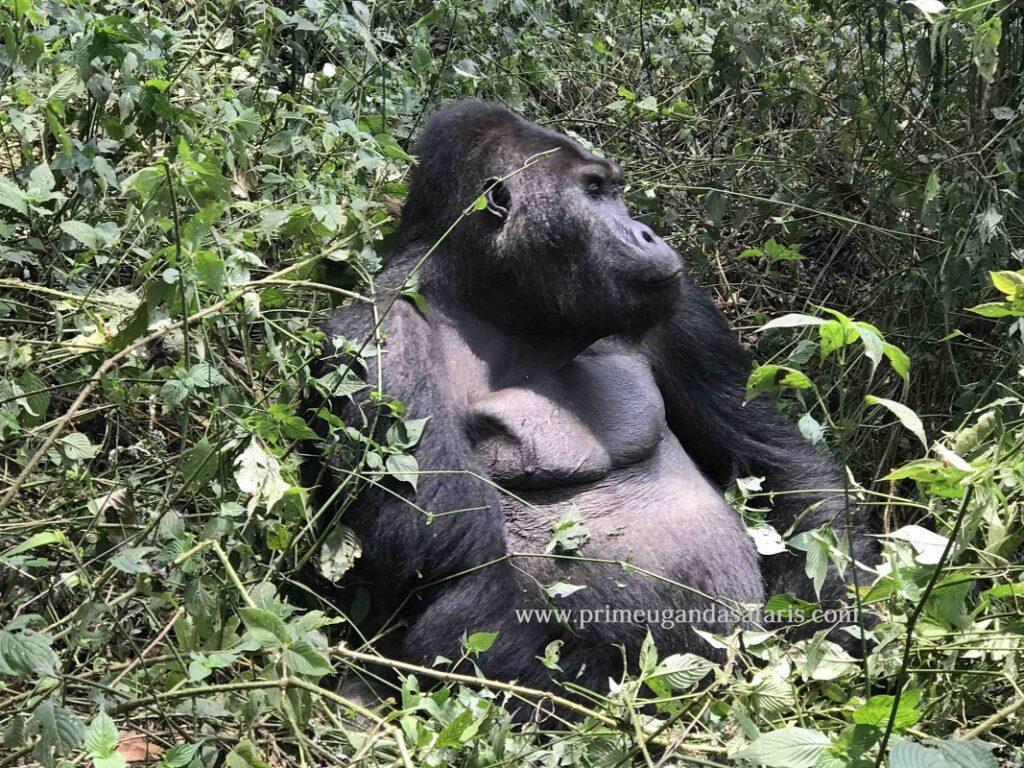 5 Days Congo Gorilla & Nyiragongo Safari