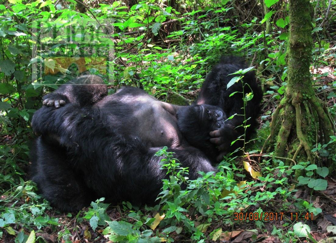 4 days Gorilla Tour in Rwanda Uganda