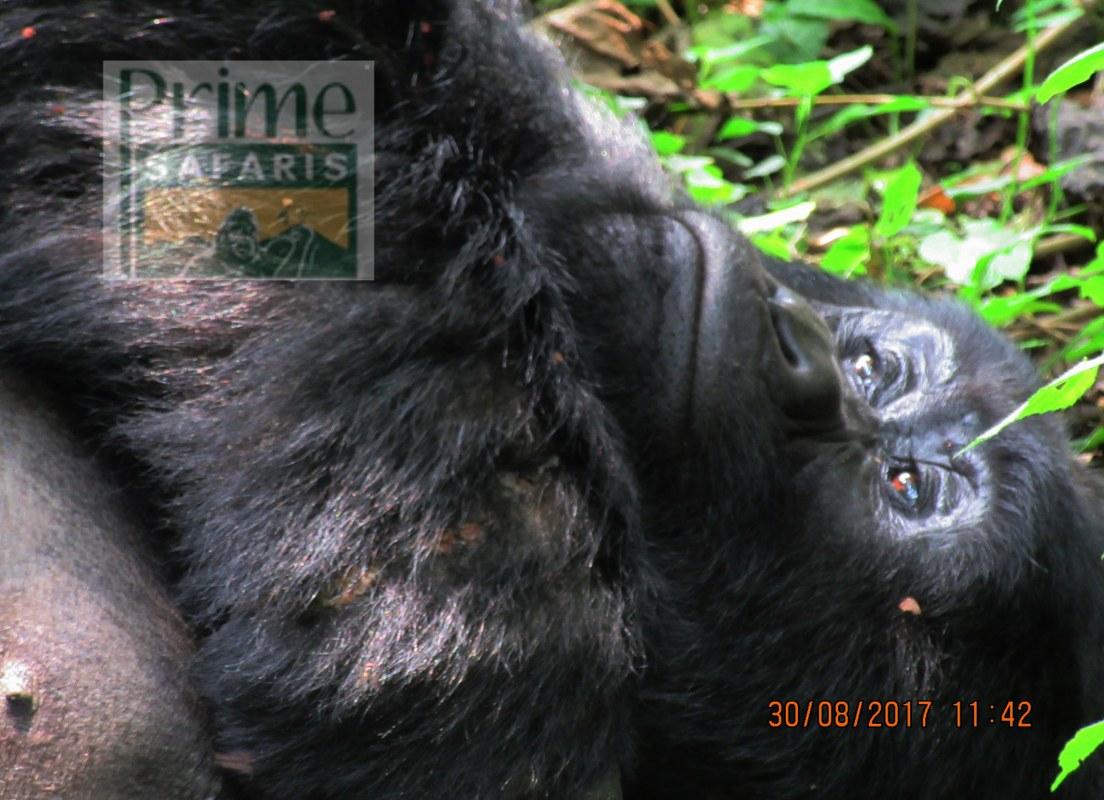 6 days Rwanda Uganda Wildlife Safari