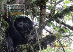 12 Days Rwanda Uganda Gorilla Safari