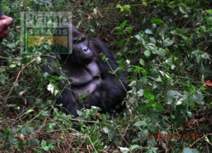 3 days Rwanda Uganda Gorilla Safari