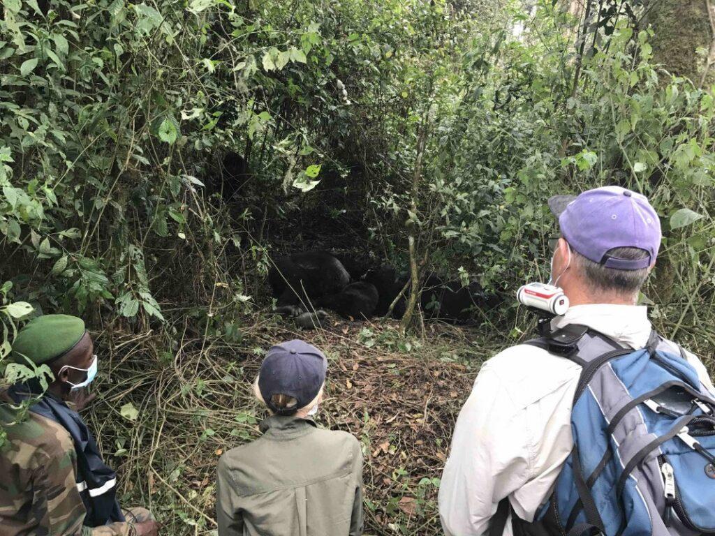 7 Days Congo Gorilla & Adventure Safari