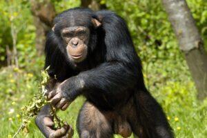 4 Days Uganda Gorilla Safari, Wildlife safari & Chimpanzee Tour