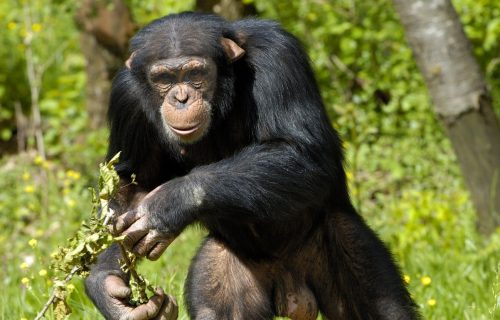4 Days Uganda Gorilla Safari, Wildlife safari & Chimpanzee Tour
