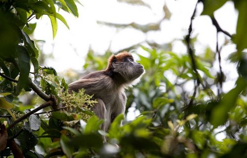 6. red-colobus monkeys_1280x826