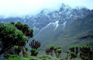 Mount Rwenzori