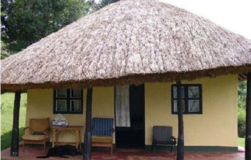 Chimpanzee Forest Guesthouse