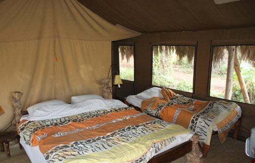 Crater forested camp