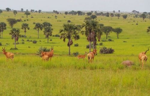 Game Drives in mount elgon