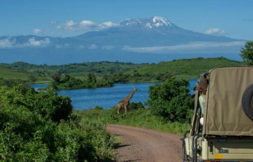 Game drives in Kilimanjaro national park
