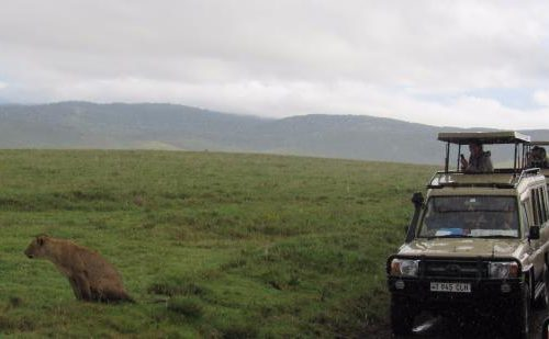 Game drives in ngorongoro