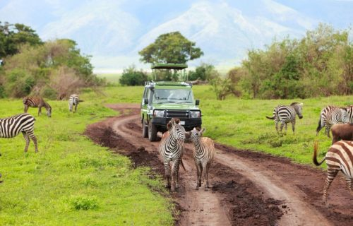Game drives in serengeti