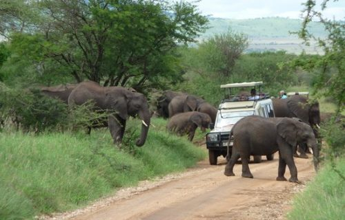 Game drives in tarangire national park