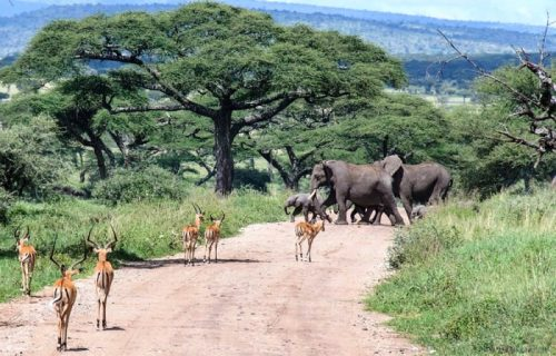 Lake Manyara National Park game Nature walks