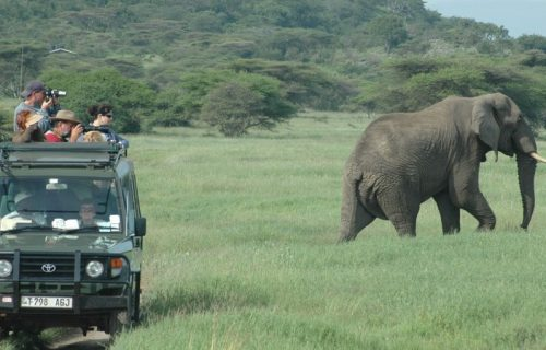 Launch trips in selous game reserve