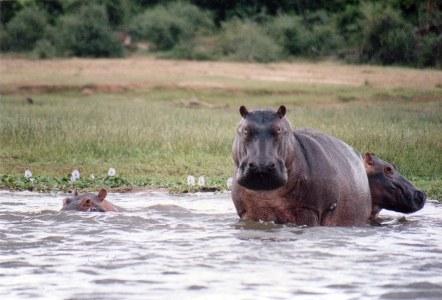 Murchison Falls National Park Uganda Safari Tour