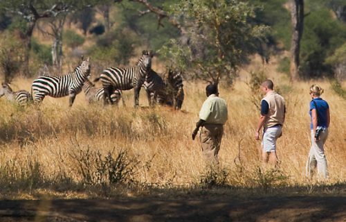 Nature walks in Serengeti