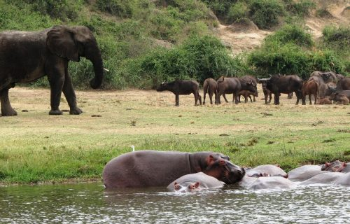 Queen Elizabeth National Park Wildlife Safari in Uganda