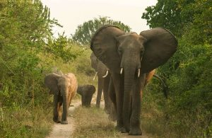 Queen Elizabeth Uganda Wildlife safari tour