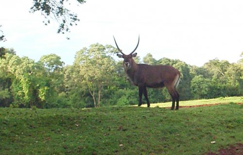 Wildlife in mount elgon