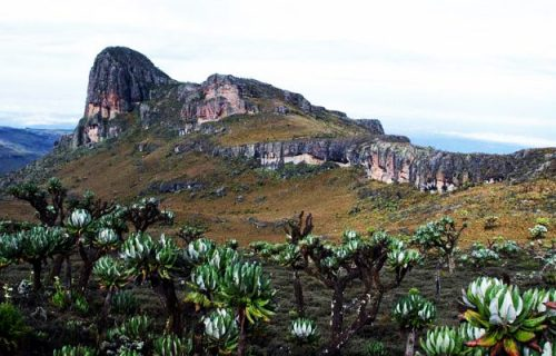 vegetation in mount elgon