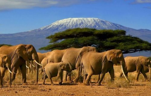 3 Days Tanzania Safari to Ngorongoro Crater and Lake Manyara National Park