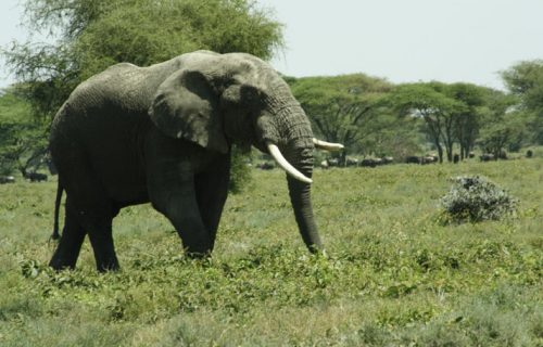 6 Days Tanzania Safari Tour